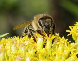 A méhpempő felhasználása
