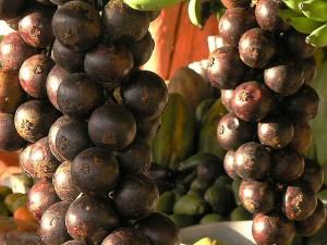 Mangosztán gyümölcspüré